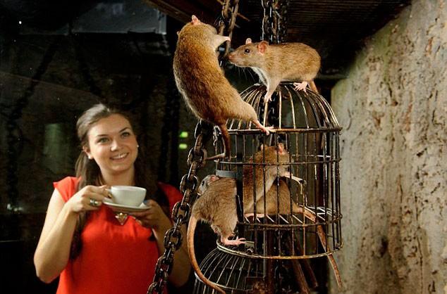 Rat Caféin
