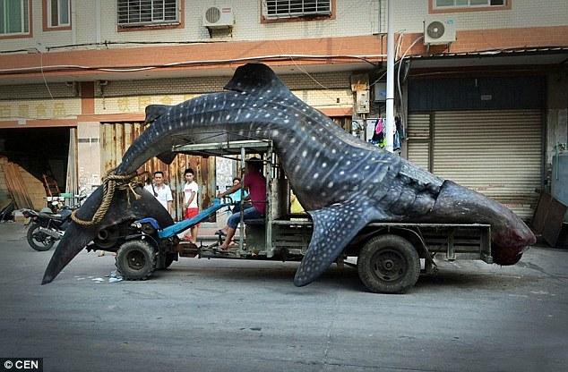 Massive Whale Shark