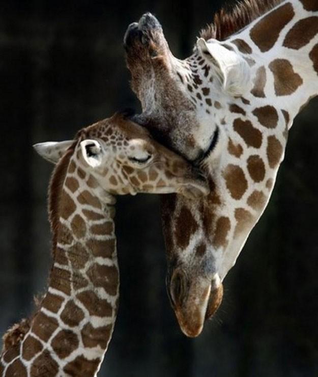cute big animal
