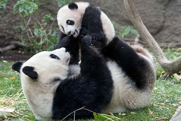 cute pics of animals
