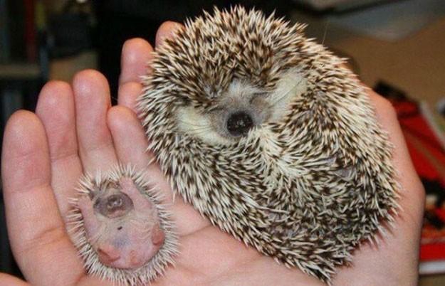 cute small animal