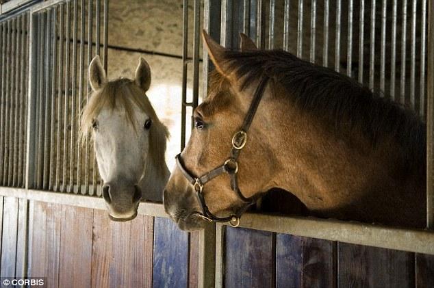 horses crucial signals