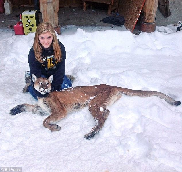 cougar shot dead