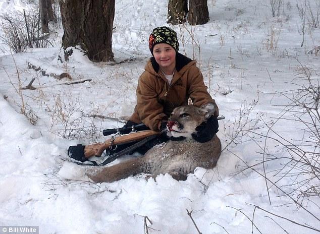shot cougar dead