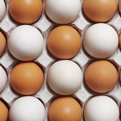 weight-loss diet Eggs